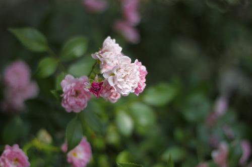 SDF_flowers_gb_06